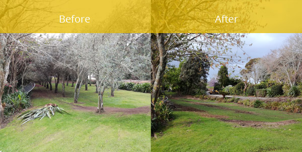 Cherry trees before and after